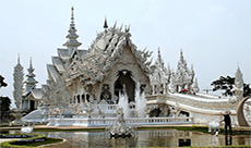 White temple and elephants tour