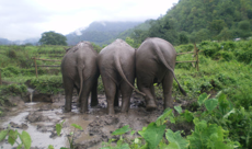 trekking with elephant care